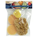 Pro Art Combo Sponge Set, 1 Silk Sponge, 2 Synthetic Sponge and 1 Grass Sponge