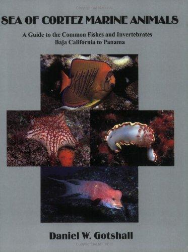 Sea of Cortez Marine Animals: A Guide to the Common Fishes and Invertebrates Baja California to Panama