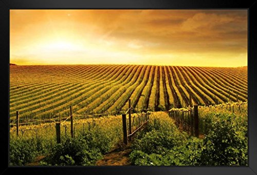 Stunning Wine Vineyard Sunset Barossa Valley Photo Art Print Framed Poster 20x14 inch