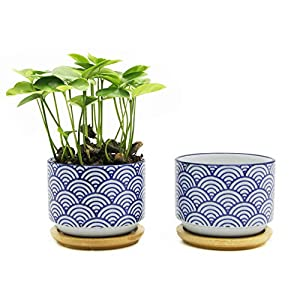 Goldblue Blue and White Ceramic Succulent Planter Pots 49
