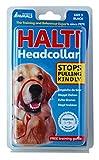 The Company of Animals Halti Head Collar, Black