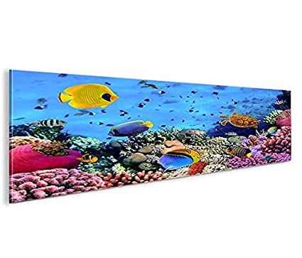 De Imágenes sobre lienzo Acuario Peces Mar Agua Doktor peces tropicales panorámico XXL Póster Lienzo Cuadro