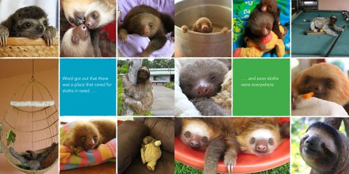 A Little Book Of Sloth -