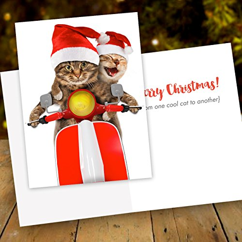 Scooter Cats Holiday Card Pack - Set of 25 cards - 1 design, versed inside with envelopes Photo #6