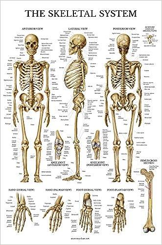 Body Structure Bar Sticker Paper Skeleton Peinture System Poster Squelettique