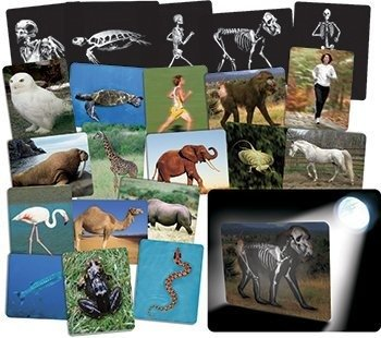 UPC 066960592504, Whats Inside Animals Flash Cards