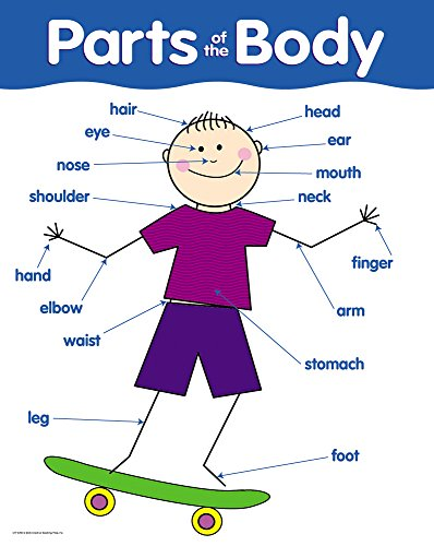 Creative Teaching Press Parts of The Body Basic Skills Chart (5700) ()