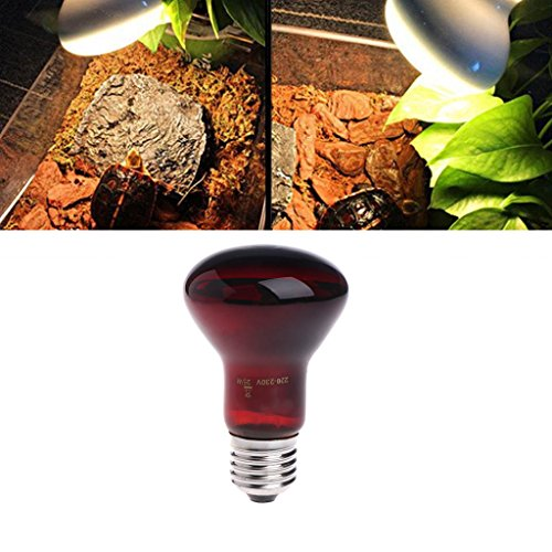 Stebcece Heat Bulb Infrared Emitted Night Light for Reptile and Amphibian Use (Red, 25W)