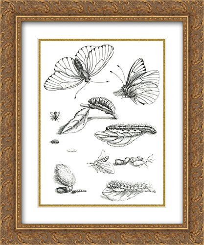 Price comparison product image Maria Sibylla Merian 2x Matted 20x24 Gold Ornate Framed Art Print 'Plate LXXXV