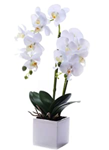 LEEMAN Artificial Lifelike Real Touch Flowers Arrangement Phalaenopsis Bonsai Orchid Miniascape Home Decoration (White 535)