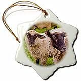3dRose Sheep, Mont Saint-Michel, Normandy, France Snowflake Ornament,