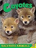Coyotes, Christine Webster, 1619132621