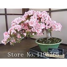 Japanese Sakura Flower seeds 10pcs/lot Cherry Blossoms Bonsai tree Seeds Sakura Seeds 6 Colour cherry Red