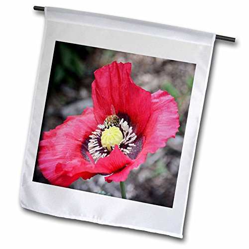 Poppy Nectar - 3dRose WhiteOaks Photography and Artwork - Poppy Flowers - Home is where the nectar is a photo of a bee inside a poppy flower - 18 x 27 inch Garden Flag (fl_252494_2)