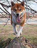 Notebook: Shiba Inu dog branch frontal shiba inu