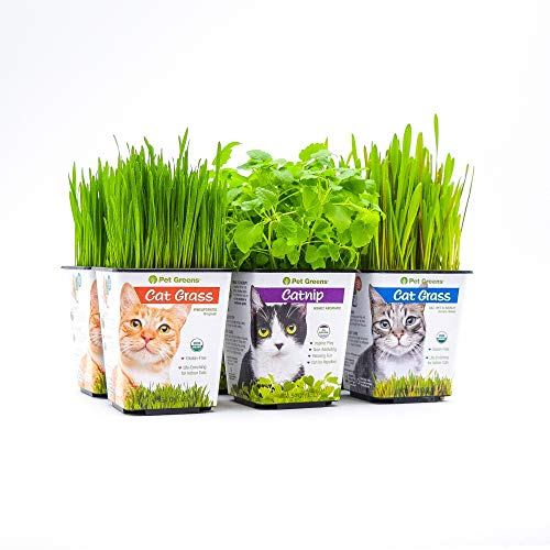 Bell Rock Growers Pet Greens Live Pet Grass Multi Pack, 15 By 11 By 7-Inch, - Treat Dog Bell Rock