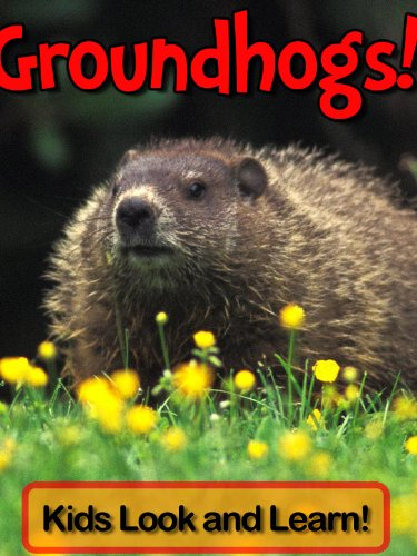 Groundhogs! Learn About Groundhogs and Enjoy Colorful Pictures - Look and Learn! (50+ Photos of Groundhogs)