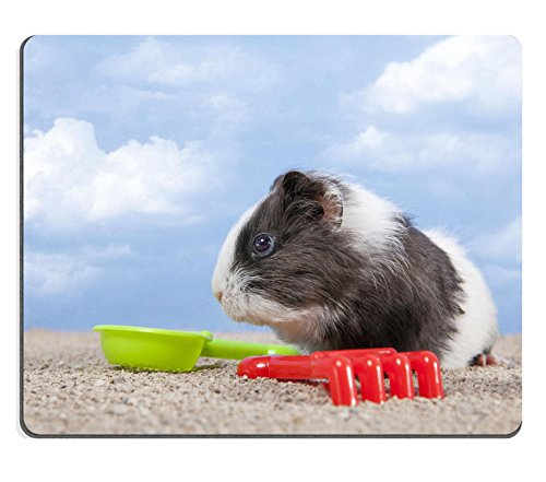 Luxlady Mousepad guinea pig playing in the sand with a rake and shovel of colors the sky IMAGE 20271053