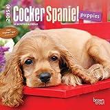 Cocker Spaniel Puppies 2015 Mini 7x7