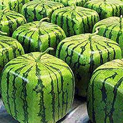 XKSIKjian's Garden 50 Pcs Rare Square Watermelon Seeds Ornamental Plant Home Yard Office Decor Non-GMO Seeds Open Pollinated Seeds for Planting : Garden & Outdoor