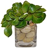 The French Bee Succulents with White Rocks in a Square Vase-Green