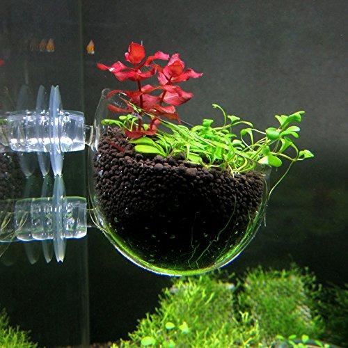 Buy salt water plants