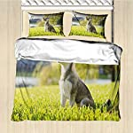 GLDirect Alaskan Malamute Duvet Cover Size 3 Piece Klee Kai Puppy Sitting on Grass Looking Up Friendly Young Cute Animal Extra Soft Deep Pockets Multicolor Queen Size 6