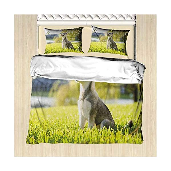 GLDirect Alaskan Malamute Duvet Cover Size 3 Piece Klee Kai Puppy Sitting on Grass Looking Up Friendly Young Cute Animal Extra Soft Deep Pockets Multicolor Queen Size 2