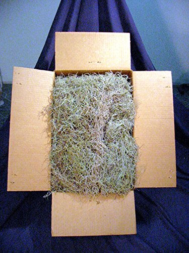 Spanish Moss Bulk 3 lbs Natural Real as seen down south