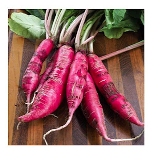 China Rose Radish Seeds, 125+ Premium Heirloom Seeds, ON SALE!, (Isla's Garden Seeds), Non Gmo Organic, 99.7% Purity, 90% Germination, Survival Seeds, Highest Quality!