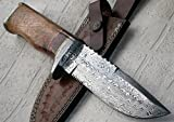 Poshland Knives REG 16 C-FR Handmade Damascus Steel 11.00 Inches Bowie Knife - Exotic Wood Handle