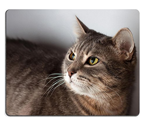Luxlady Gaming Mousepad IMAGE ID: 26566498 Portrait of a cute gray tabby cat