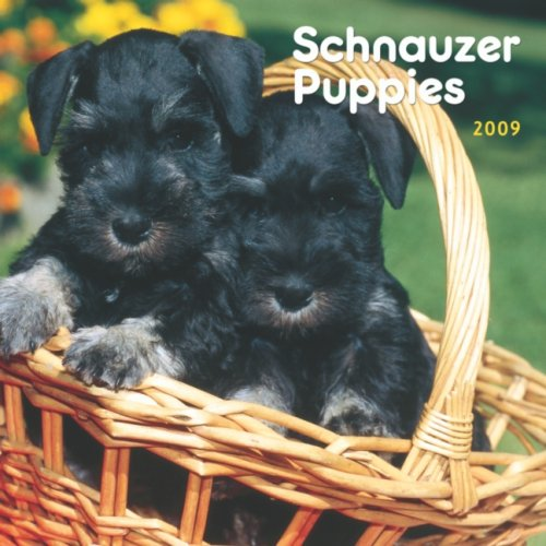 Dog 2009 Mini Calendar - Schnauzer Puppies 2009 7X7 Mini Wall Calendar