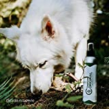 Cedarcide Original (Quart) Natural Cedar Oil Insect Repellent Formerly Known as Best Yet Insect Spray Kills and Repels Mosquitoes Ticks Fleas Mites Ants and Chiggers