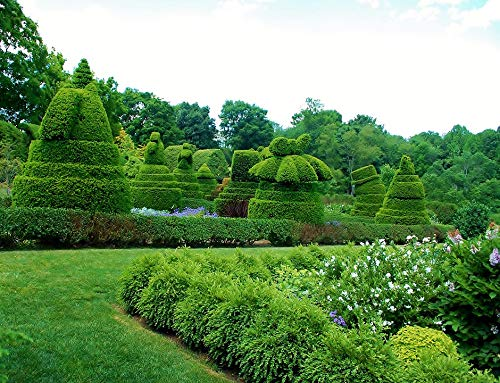 Home Comforts Canvas Print Ladew Topiary Gardens Maryland Topiary Gardens Vivid Imagery Stretched Canvas 32 x ()