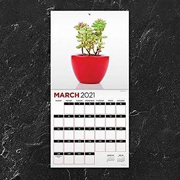"Tracker 7/""x7/"" Plants Mini Monthly Calendar TF PUBLISHING 2021 Can/'t Kill Me"