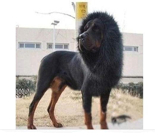 LIXIAQ1 Peluca de Melena de león para Perro, Disfraz de Halloween ...