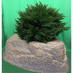 "Artificial UV Rated Outdoor 30"" Ball Cypress Topiary Tree Bundled with Rock Planter Cover, by Silk Tree Warehouse 84"
