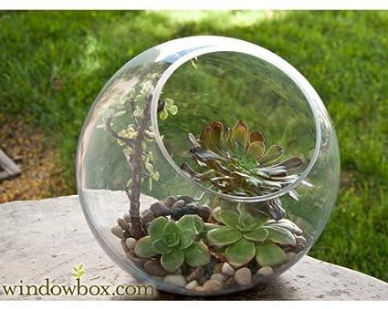 Amazon Com Large Terrarium Bubble Bowl Home Kitchen