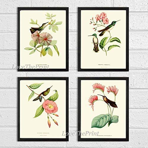 - Hummingbirds Botanical Print Set of 4 Art Antique Beautiful Tripical Birds Flowers Plants Illustration Home Room Decor Wall Art Unframed