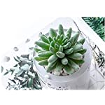 MAXZONE-Fake-Succulents16pcs-Artificial-Succulents-Picks-Unpotted-Faux-Succulent-Assortment-in-Flocked-Green-in-Different-Type-Different-Size-Succulents-Echeveria-Agave-Floral-1-Green
