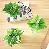 MyGift Modern Mini Artificial Assorted Potted Taro