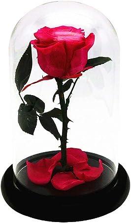 HY&PPJQ Flor eterna,Rosa Regalo del día de San valentín Principito Cubierta de Cristal Flores secas Caja de Regalo Regalo niña Regalo Creativo-F: Amazon.es: Hogar