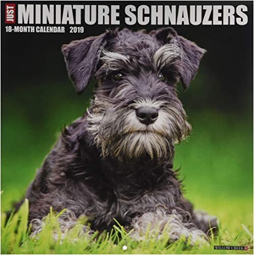 Just Miniature Schnauzers 2019 Wall Calendar (Dog Breed Calendar)