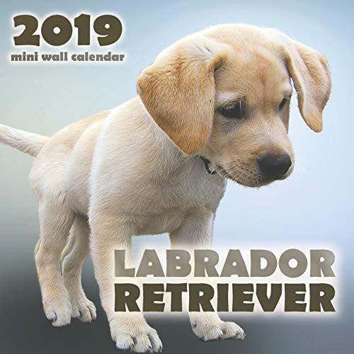 (Labrador Retriever 2019 Mini Wall Calendar)