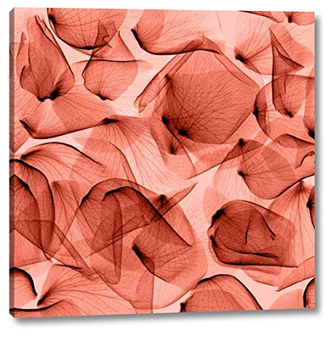 """Rose - Rouge by Steven Meyers - 23"""" x 23"""" Gallery Wrapped Giclee Canvas Print - Ready to Hang"""