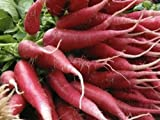 200pcs Non-GMO Red Radish Seeds Various Selections of Fresh Plant Seeds (China Rose)