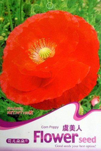 (FLOWER GODDESS Oriental Red Poppy Papaver 100 Seeds)