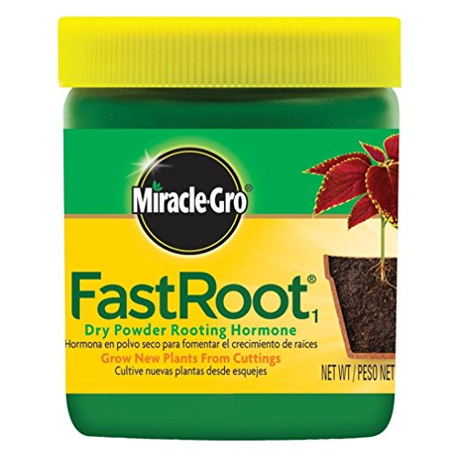 miracle-gro-fastroot-dry-powder-rooting-hormone-jar-1-1-4-ounce