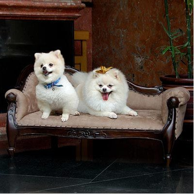D-ART COLLECTION Mahogany Victorian Pet Sofa